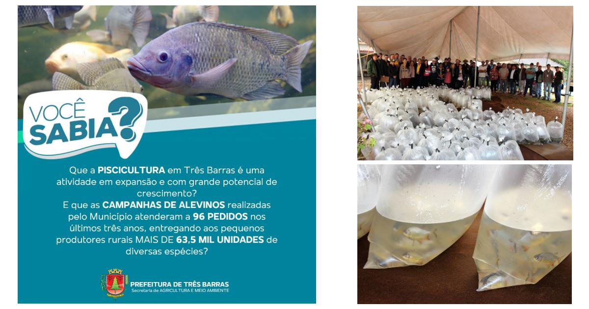 Piscicultura em Três Barras teve importante incentivo da Prefeitura nestes últimos anos
