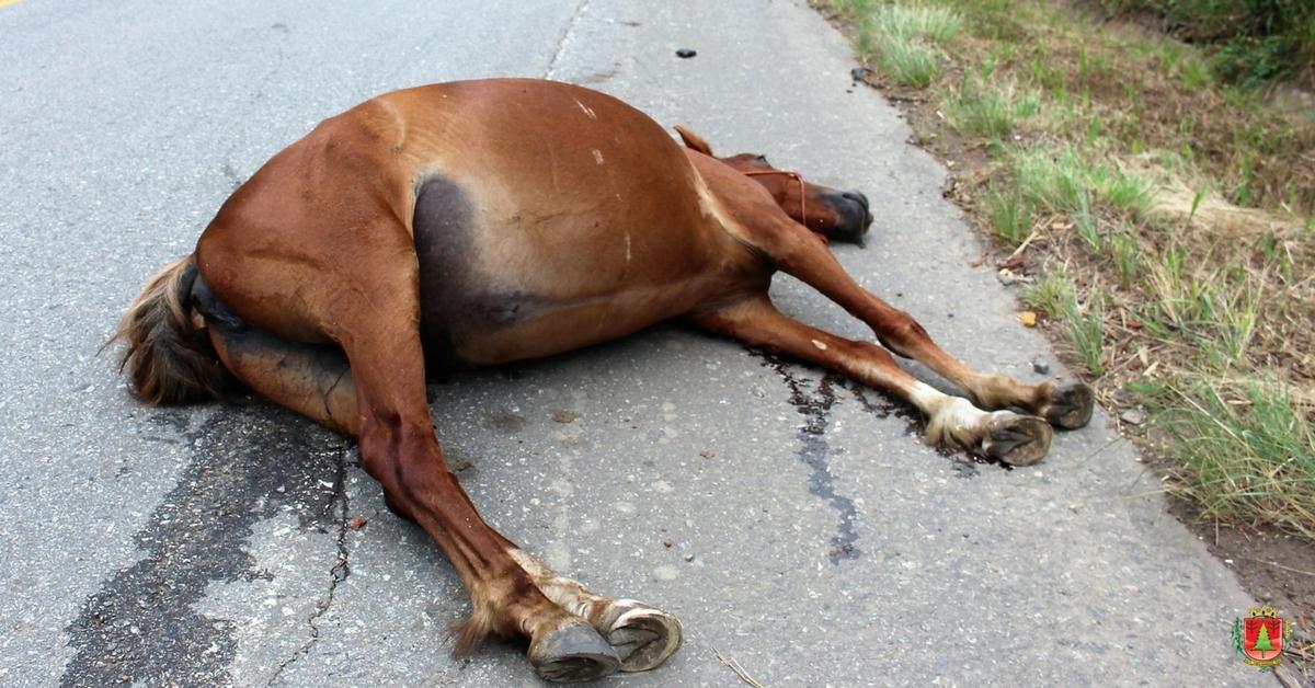 Regulamentada a apreensão de animais de médio e grande porte soltos nas vias públicas
