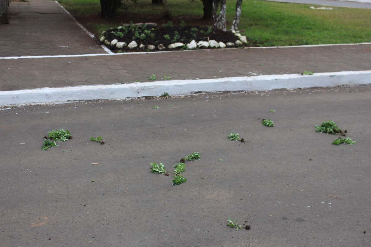 Vândalos arrancam flores plantadas em locais públicos de Três Barras